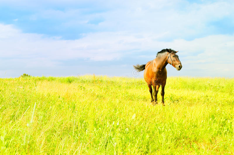 Download Horse in the Field stock photo. Image of greenery, livestock - 20608928