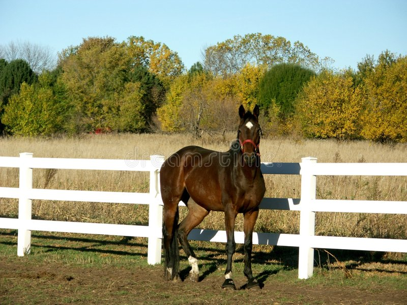 Horse In Field In Fall Royalty Free Stock Image