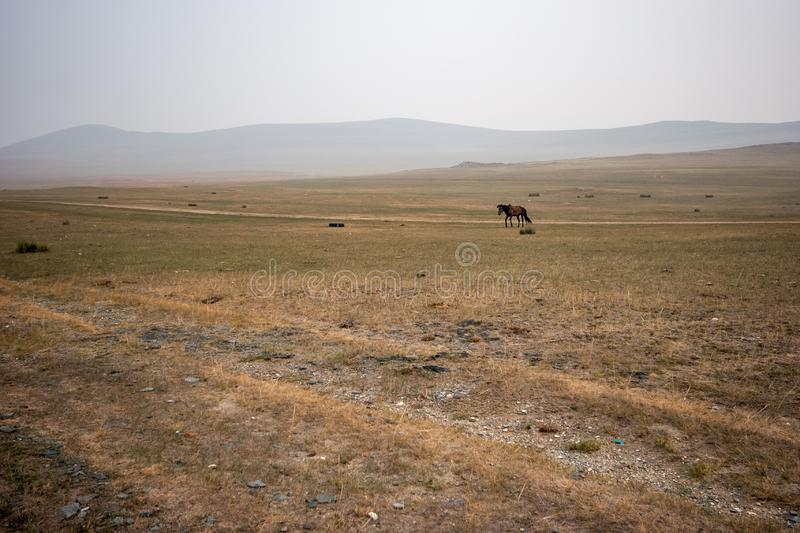 A horse on a field in the morning in fog with a road and hills in the background. Scanty steppe vegetation. Grey sky. Copy space stock photo