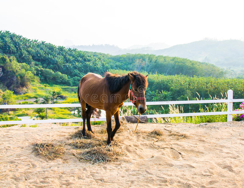 Horse in the filed. Image horse in the filed royalty free stock photo
