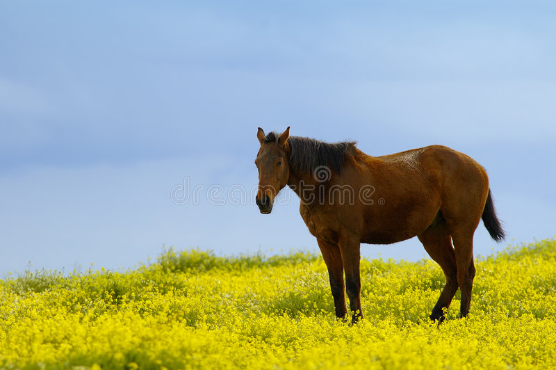 Horse between flowers stock photography