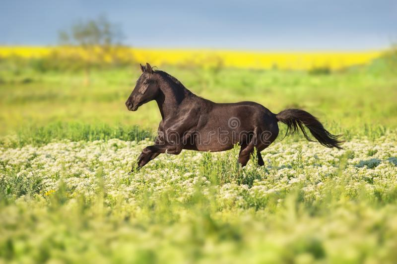 Horse on flowers royalty free stock photos