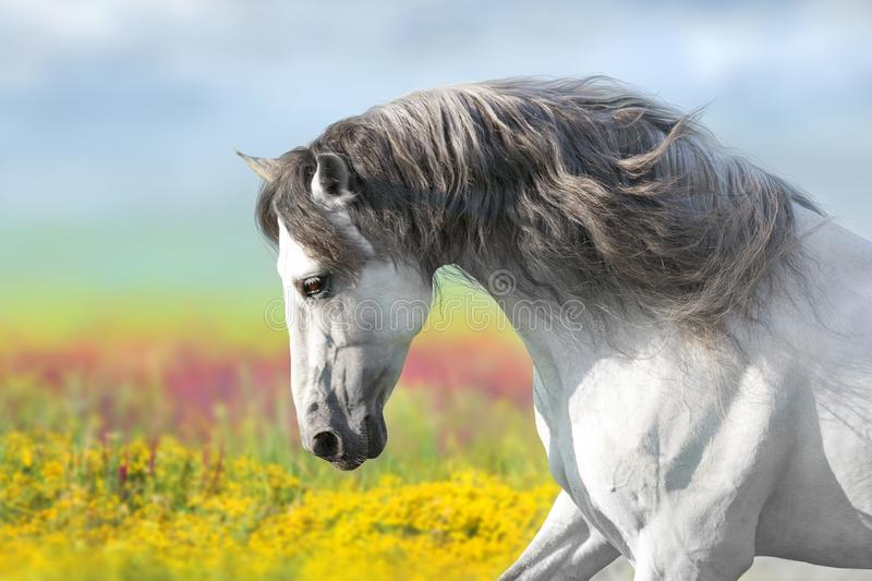 Horse in flowers meadow stock images