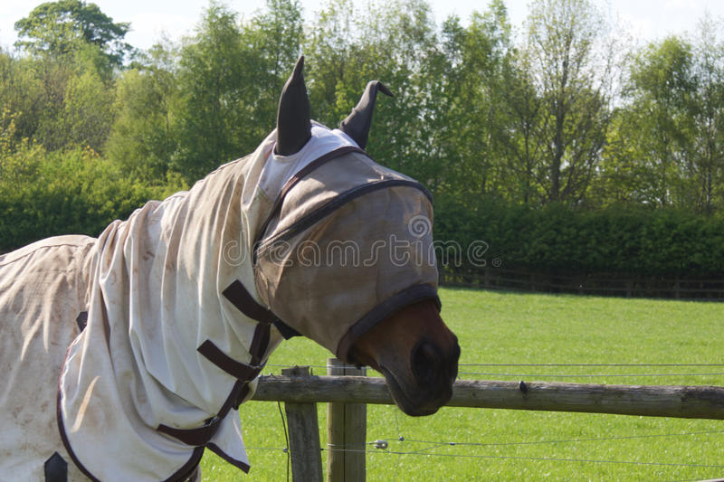Horse with fly screen hood. Horses can be spooked or suffer from excess fly problems in Sumner, these protective hoods allow the horse to see but keep the flies royalty free stock image