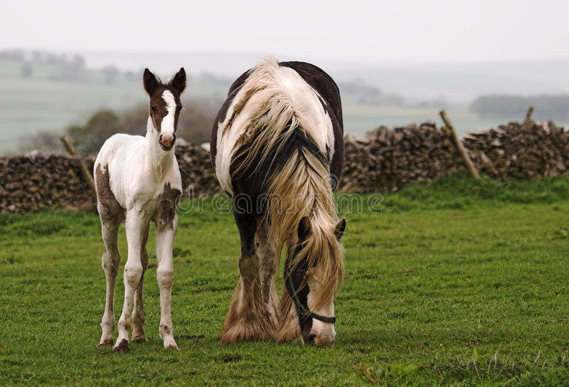 Download Horse and Foal stock photo. Image of mare, district, baby - 158928