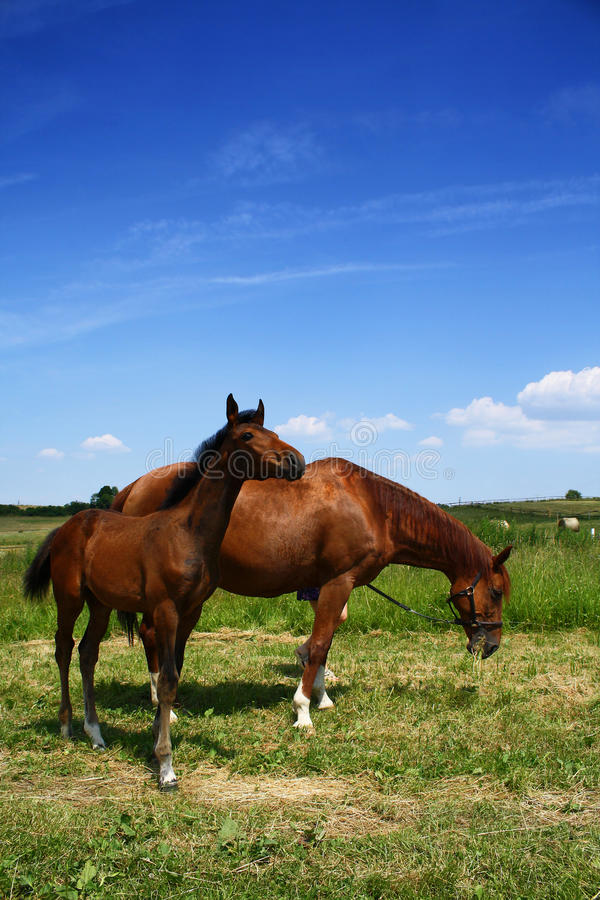 Download Horse With Foal Royalty Free Stock Images - Image: 15961499