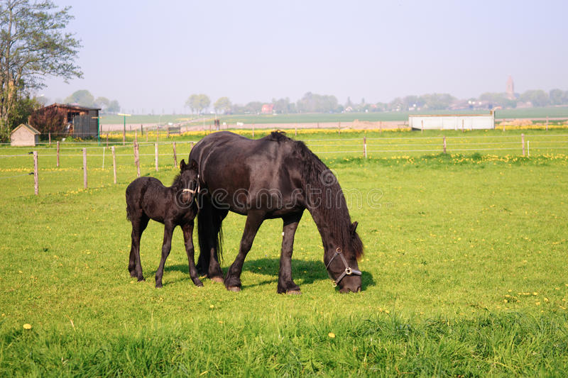 Download Horse and foal stock image. Image of baby, foal, small - 22237305