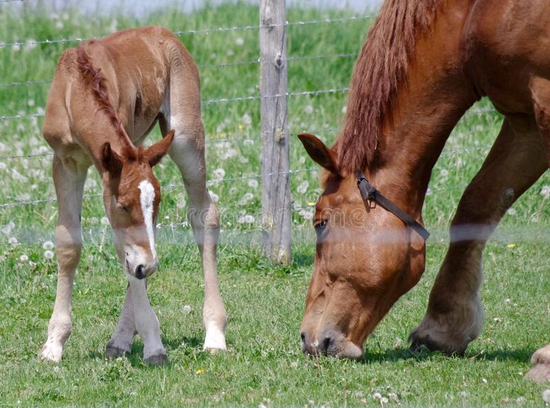 Horse And Foal Grazing Free Public Domain Cc0 Image