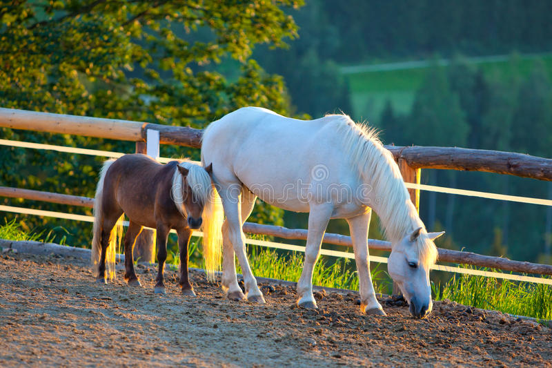 Horse and foal stock image