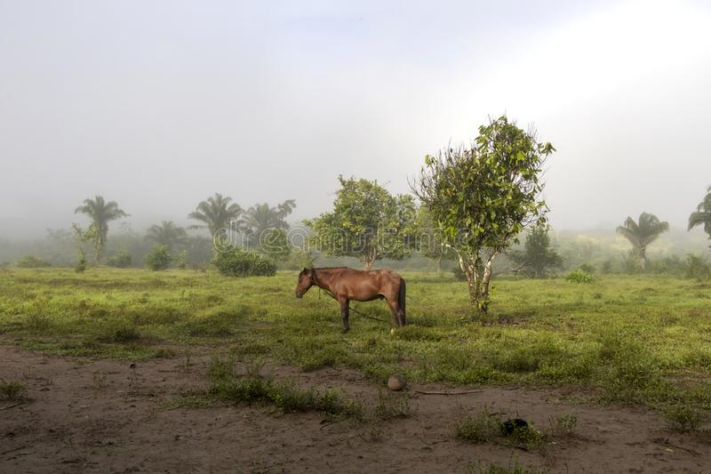 Horse in fog at jungles farm in South America. Landscape with Horse in fog at jungle farm in South America, mysterious, travel, nature, background, adventure royalty free stock photos