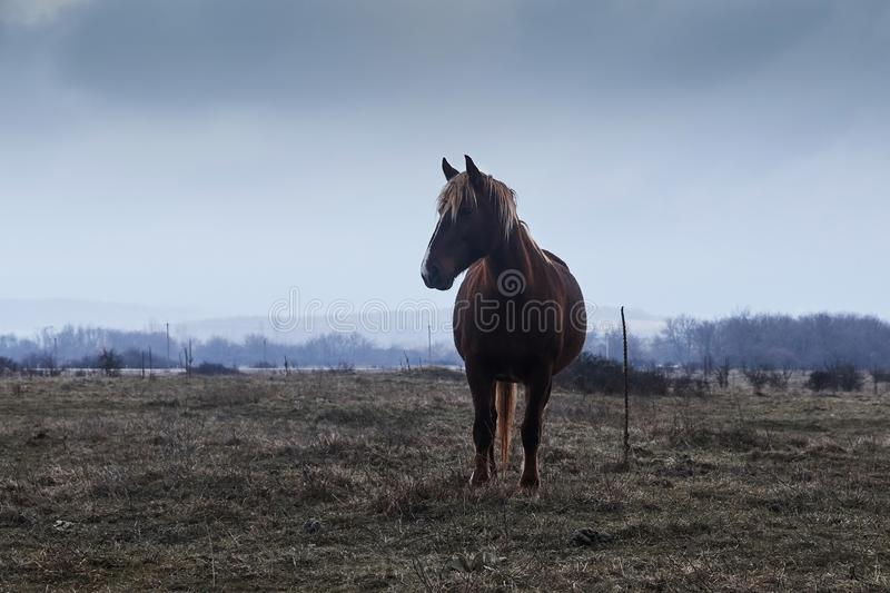 Horse in fog, stock photo