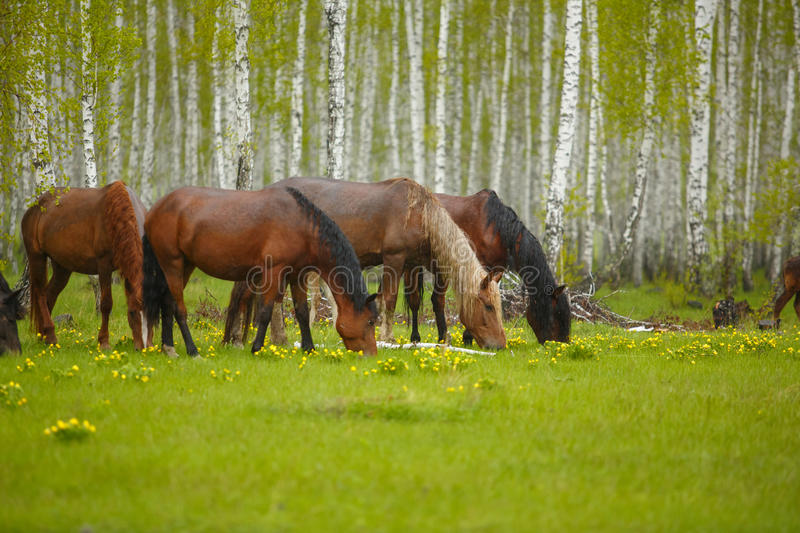A horse in a forest glade. A bright summer photo. The nature of the village, stock image