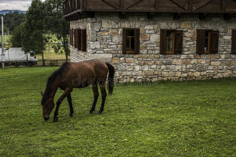 Horse. In front of house royalty free stock photo
