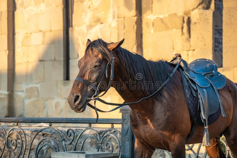 Horse in front of Mtskheta cathedral, Georgia. Travel royalty free stock image