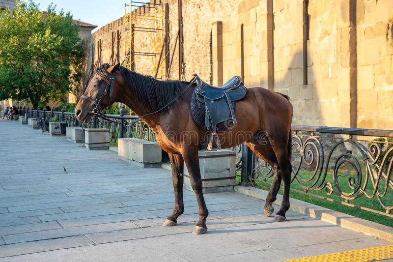 Horse in front of Mtskheta cathedral, Georgia. Travel stock photo