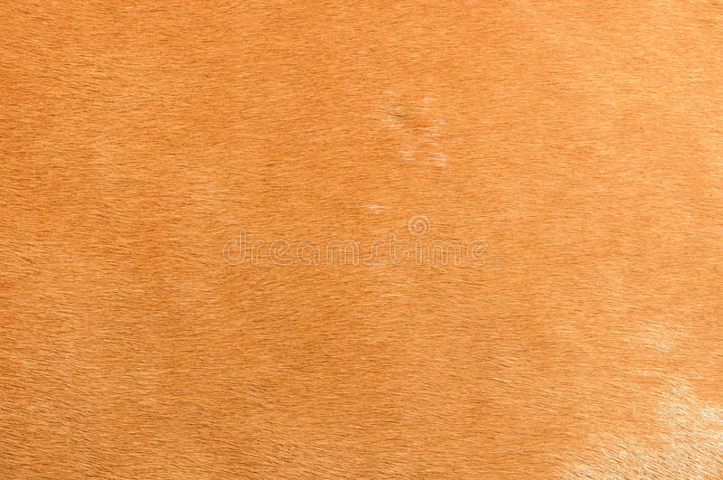 Download Horse fur stock illustration. Illustration of series - 14945466
