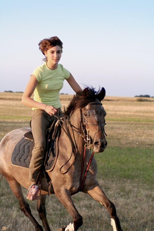 Horse galloping royalty free stock photo