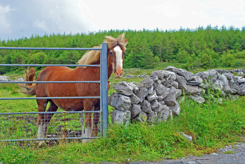 Download A Horse At The Gate stock photo. Image of landscape, countryside - 5931248