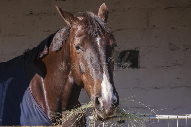 Horse Grass Stables royalty free stock photography