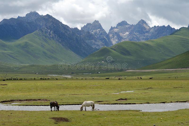 Download Horse in the grassland stock image. Image of horse, grassland - 11497097