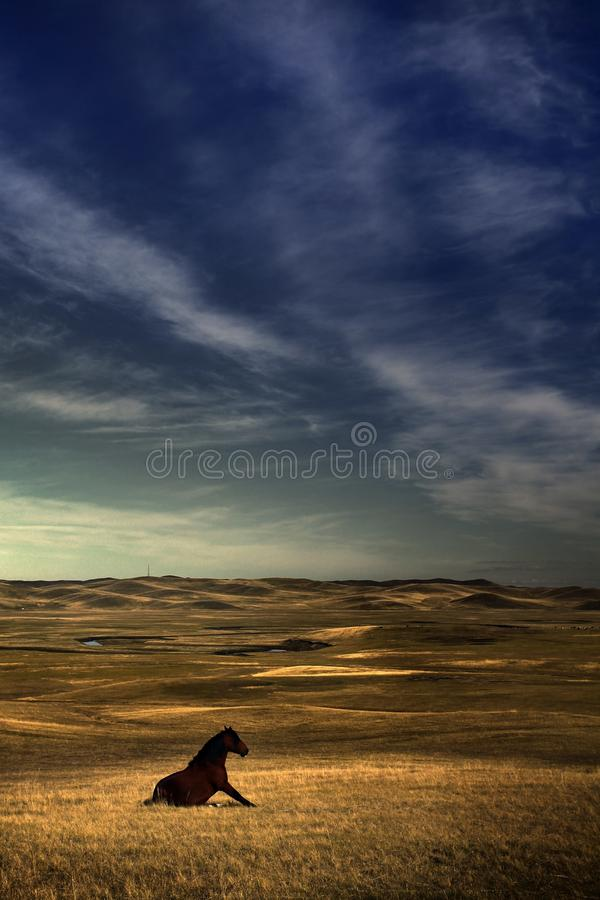 Download Horse on grassland stock photo. Image of yellow, clouds - 17082916