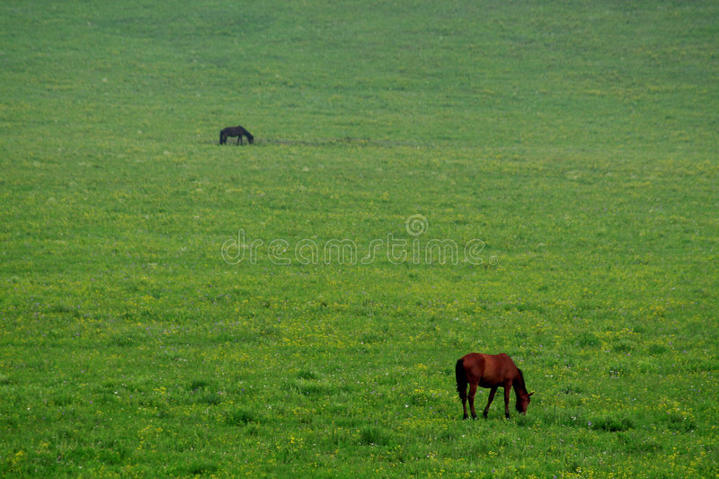 Download Horse on grassland stock image. Image of mammals, plant - 6986903