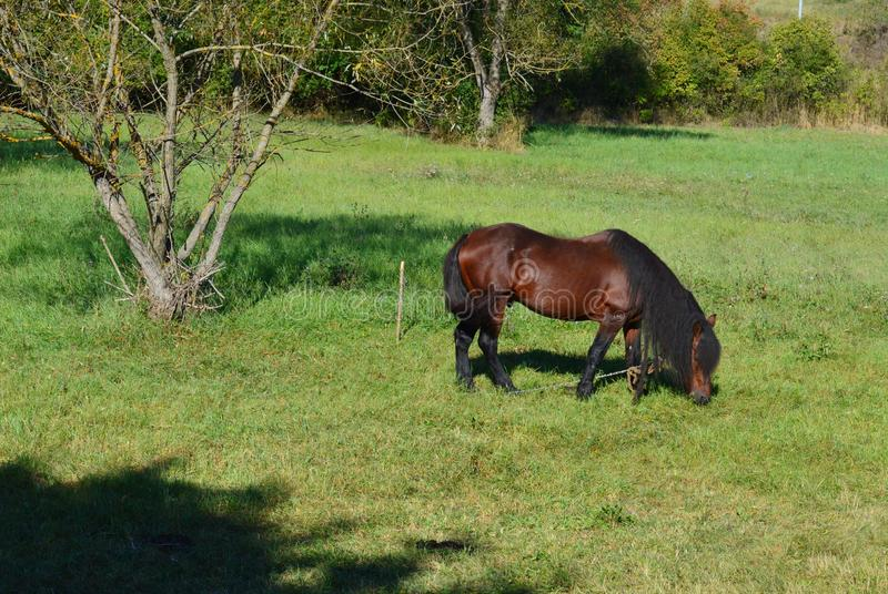 Horse grazes in the meadow stock image