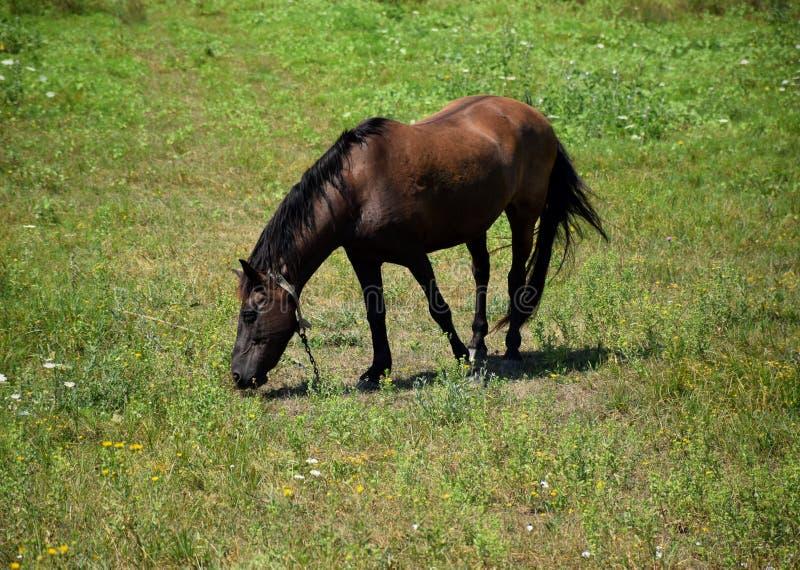 The horse grazes stock photo