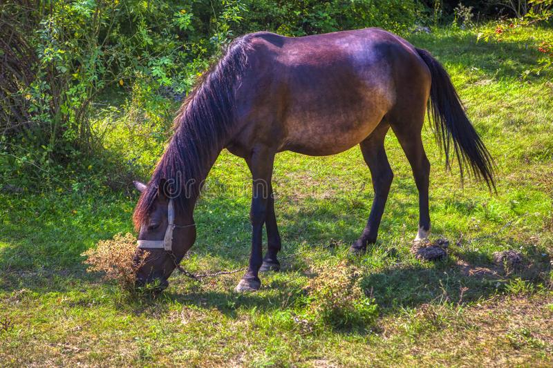 Horse grazing on field stock photos