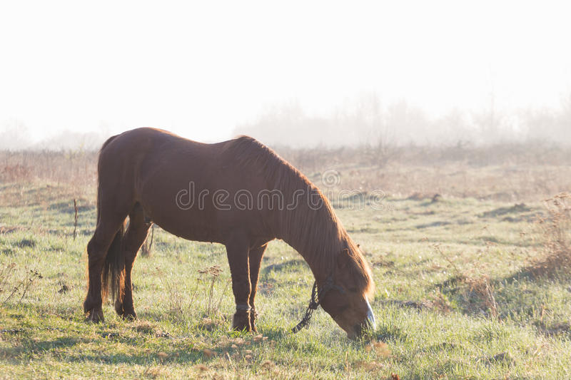 The horse is grazing in the fog in the spring.  royalty free stock photography