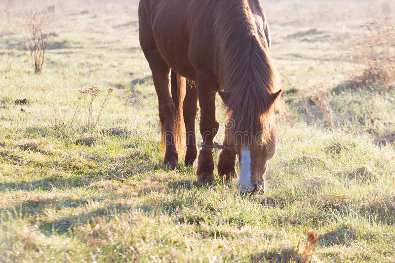 The horse is grazing in the fog in the spring.  royalty free stock photo