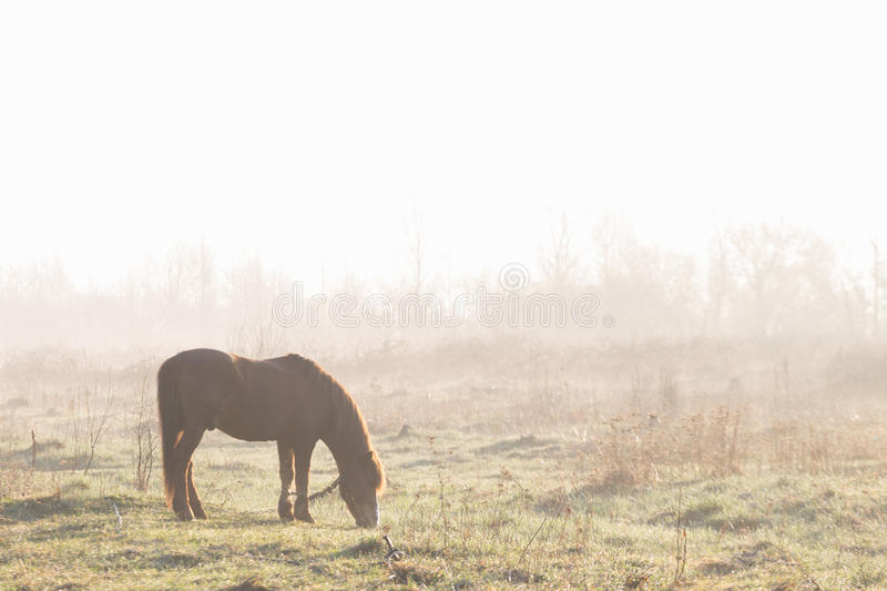 The horse is grazing in the fog in the spring.  stock images
