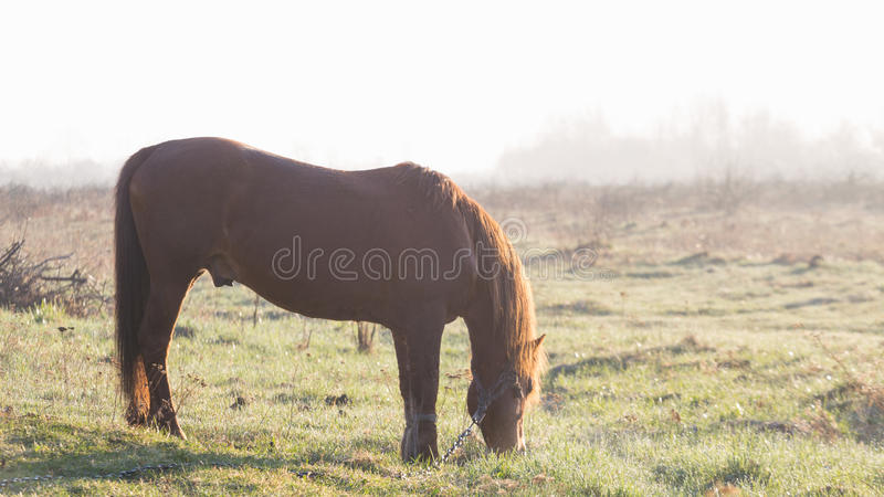 The horse is grazing in the fog in the spring.  royalty free stock photos