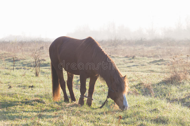 The horse is grazing in the fog in the spring.  stock photo