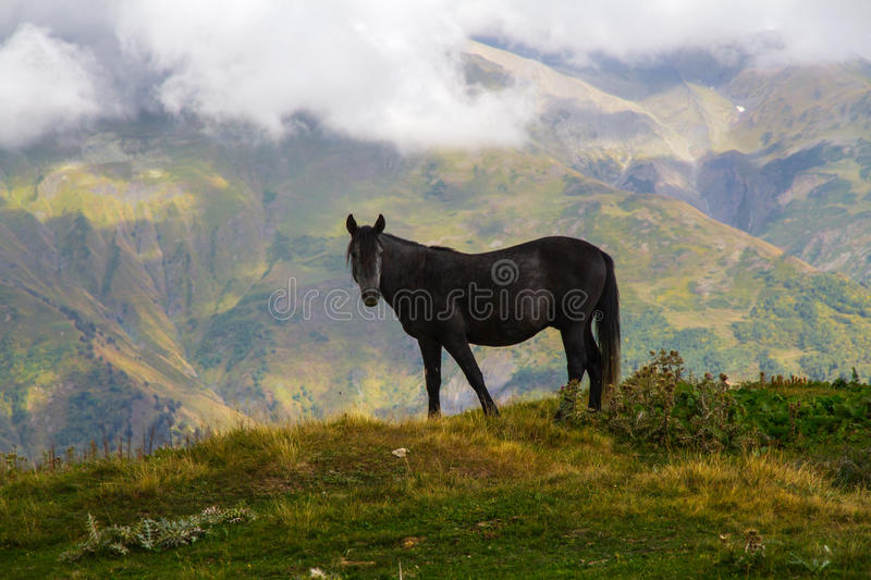 Horse grazing on the hill stock images