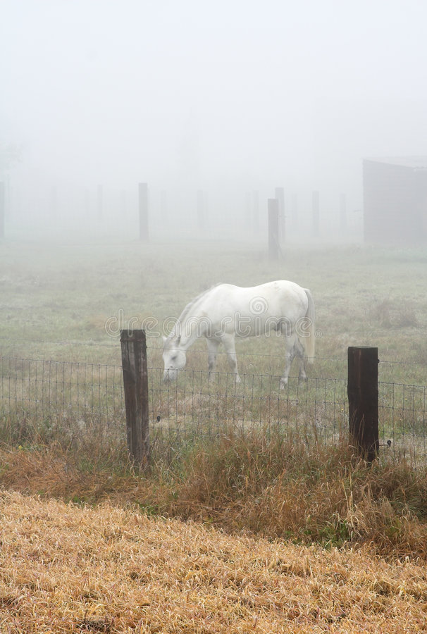 Free Horse Grazing In A Heavy Mist Royalty Free Stock Photos - 280498