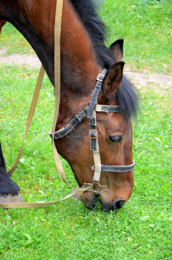 Download Horse Grazing On The Lawn Stock Image - Image: 25121721