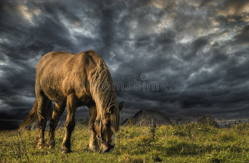 A horse grazing on a meadow royalty free stock image