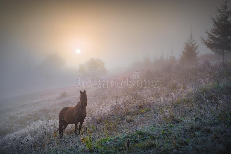 Horse grazing on a meadow at frozen morning royalty free stock images