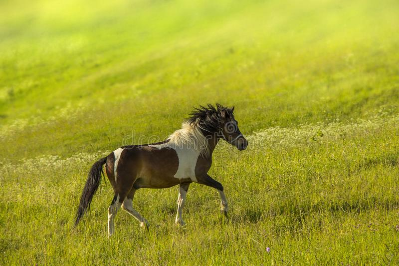 Horse grazing on a meadow stock photo
