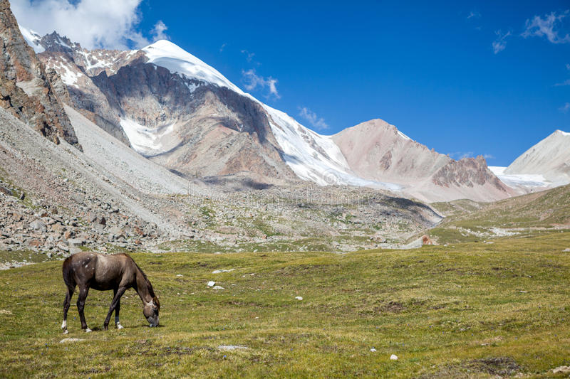 Download Horse grazing near glacier stock image. Image of alpine - 34187385