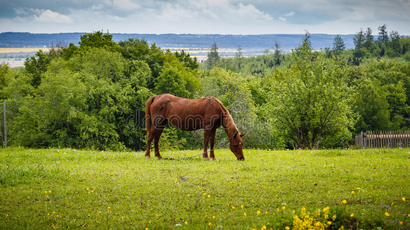 Horse grazing in the pasture, nature landscape. stock images