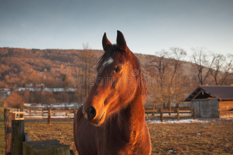 Horse grazing at sunset. Beautiful horse grazing at sunset with sunlight and farm on background stock photos