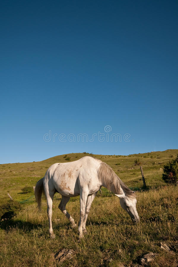 Horse grazing in the wild. Emilian Apennines, horse breeding in the wild royalty free stock photos