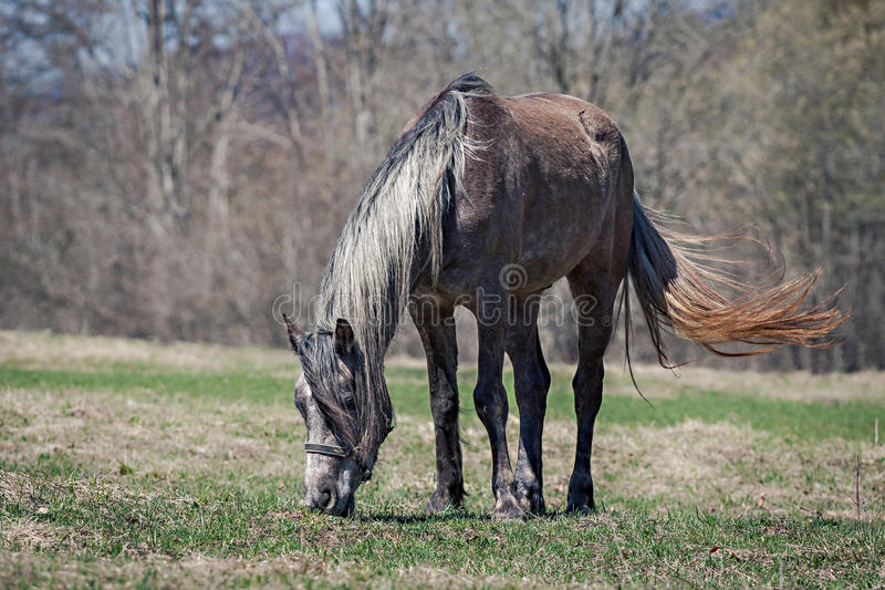 Download Horse grazing stock image. Image of relaxed, trees, brown - 30781115