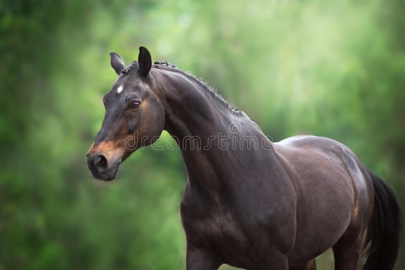 Horse on green background royalty free stock photo