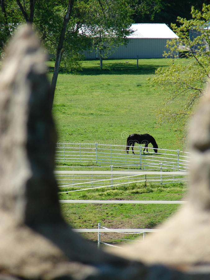 Horse in green field viewed through a rock fence structure royalty free stock image