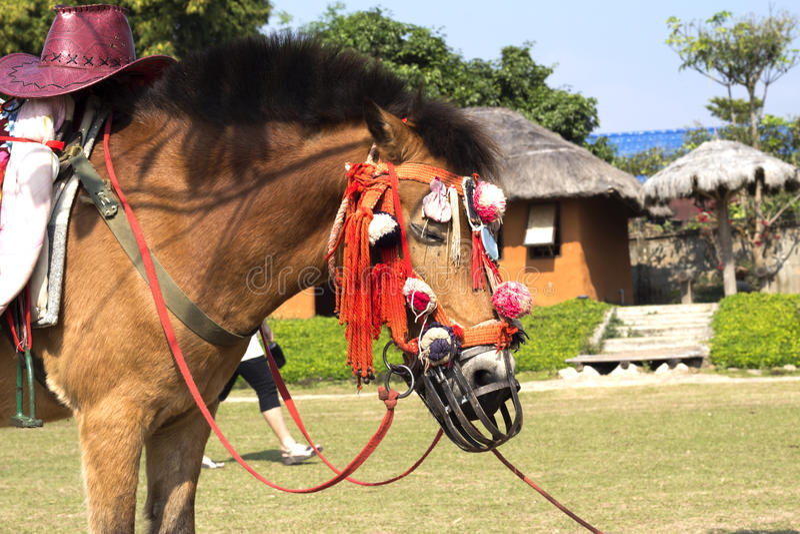 Horse hair sleep in pai maehongsorn. North thailand royalty free stock photo