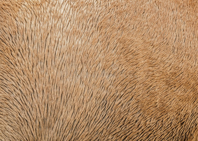 Horse Hair Texture/Background stock photography