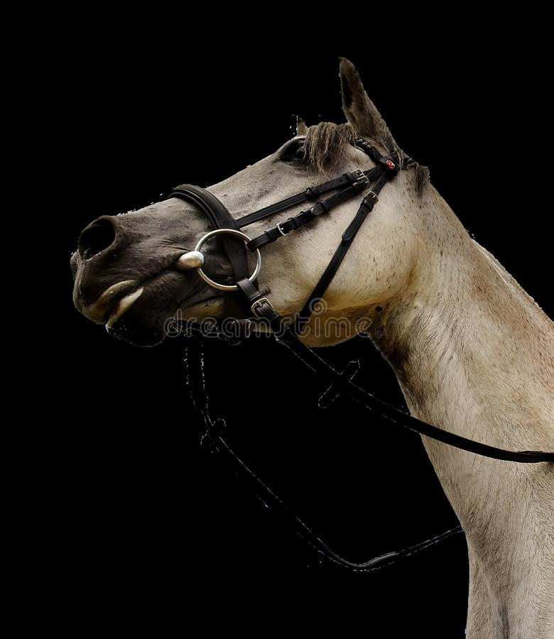 Horse, Halter, Bridle, Horse Tack Free Public Domain Cc0 Image